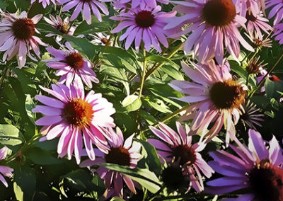 Gartenbepflanzung Solingen