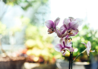 Orchideen im Blumenhaus Krause in Solingen